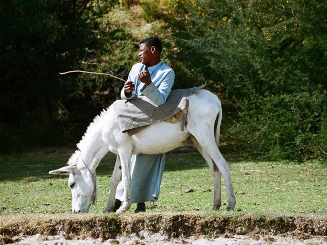 egypt - 2005_boy & donkey