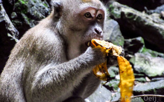 malaysia 2016_monkey at temple