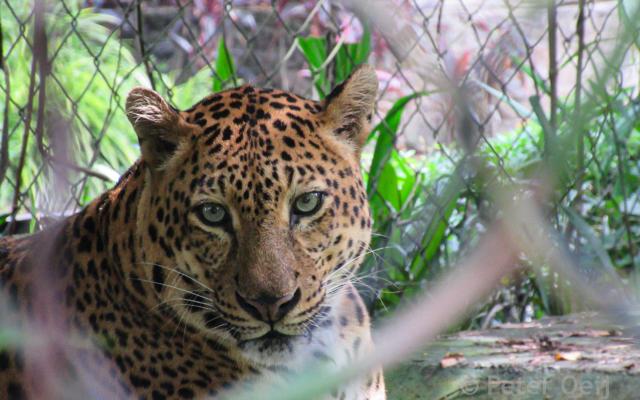 malaysia 2016_jaguar_zoo KL