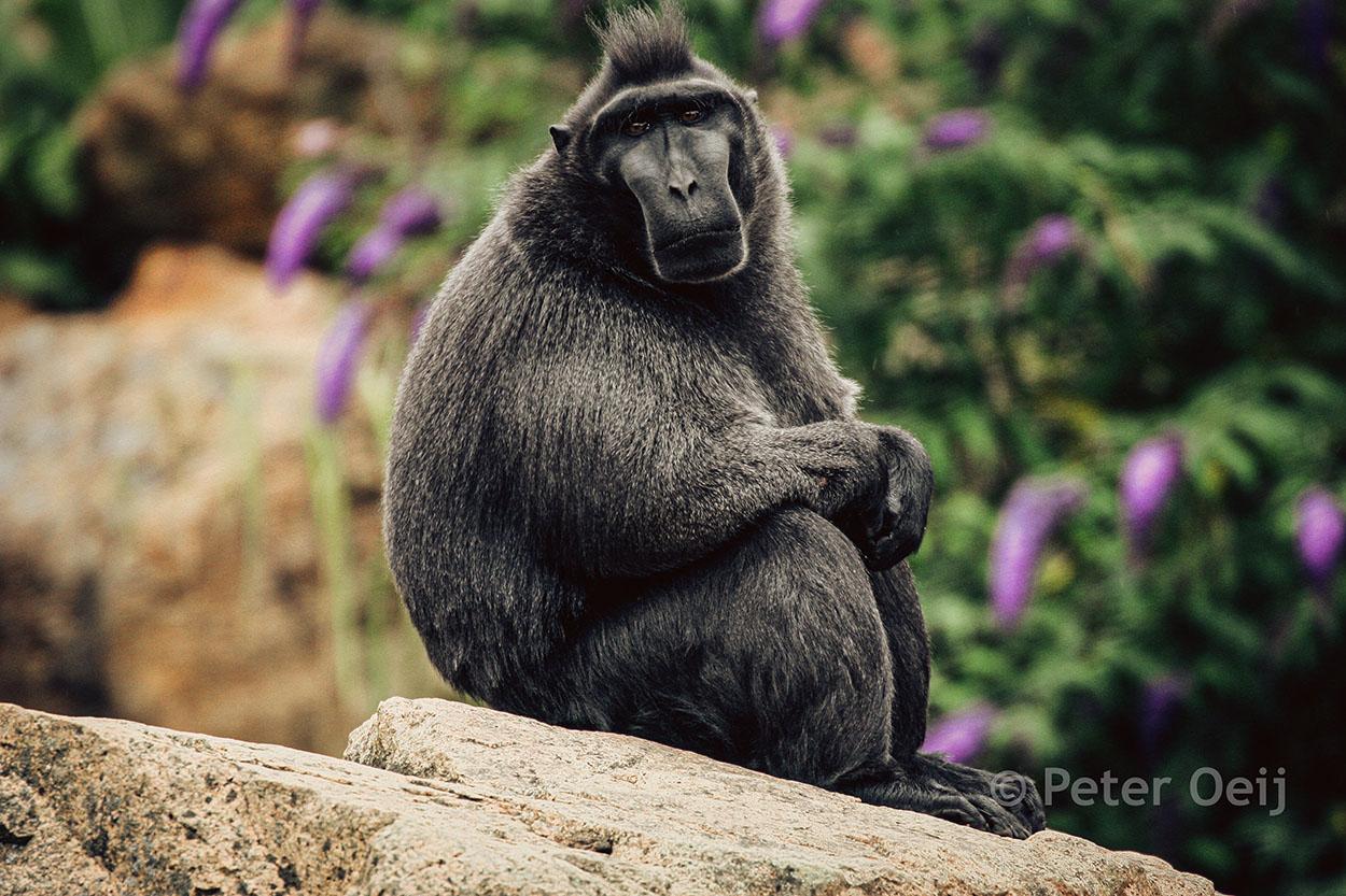 netherlands 2007_monkey_zoo