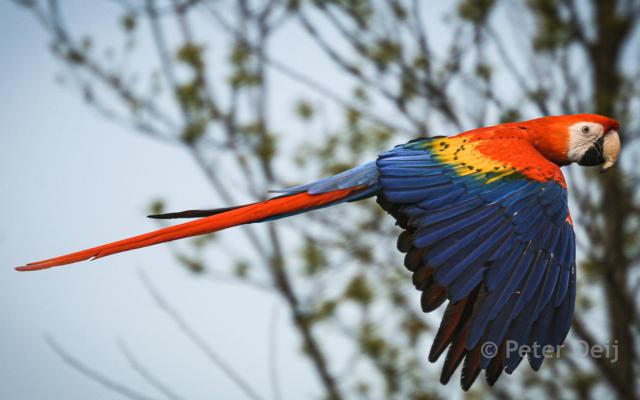 netherlands 2009_parrot_zoo
