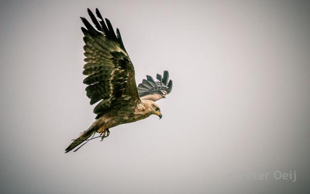 netherlands 2009_bird of prey_zoo