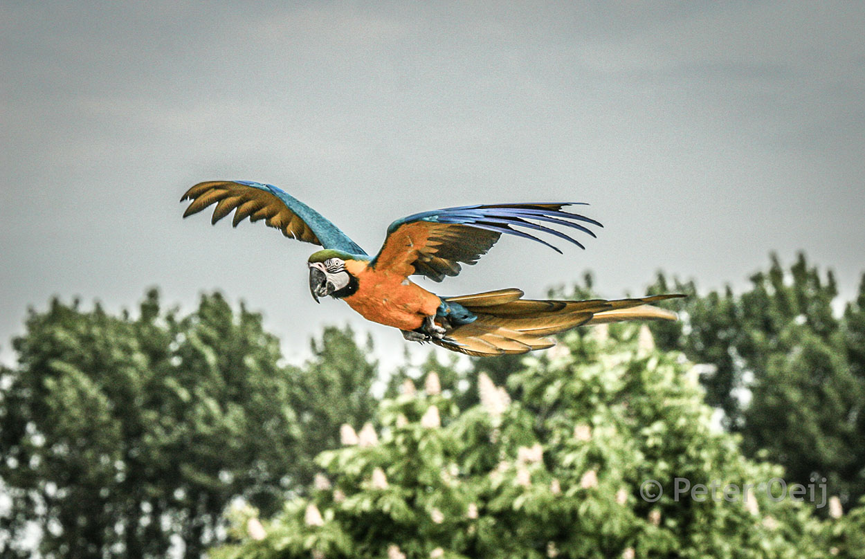 netherlands  2010_parrot_zoo