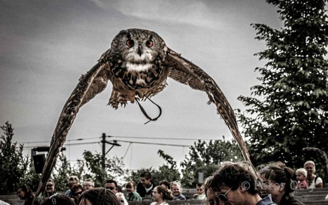 netherlands 2010_owl flight over public