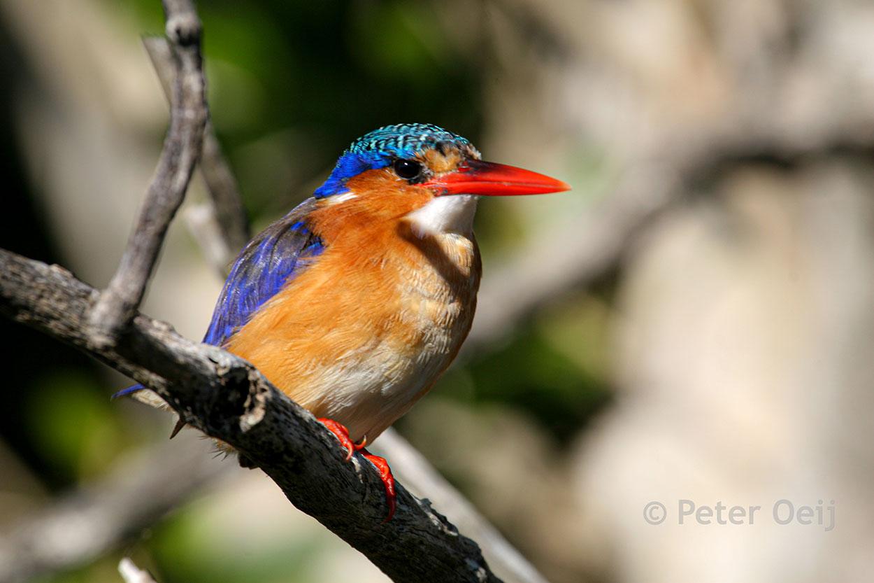 s-africa 2006_ice bird