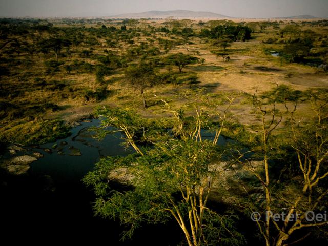 tanzania 2012-serengeti plain