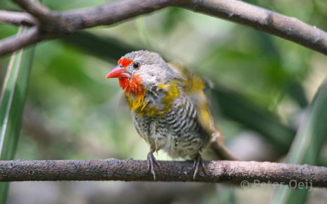 tanzania 2012_bird