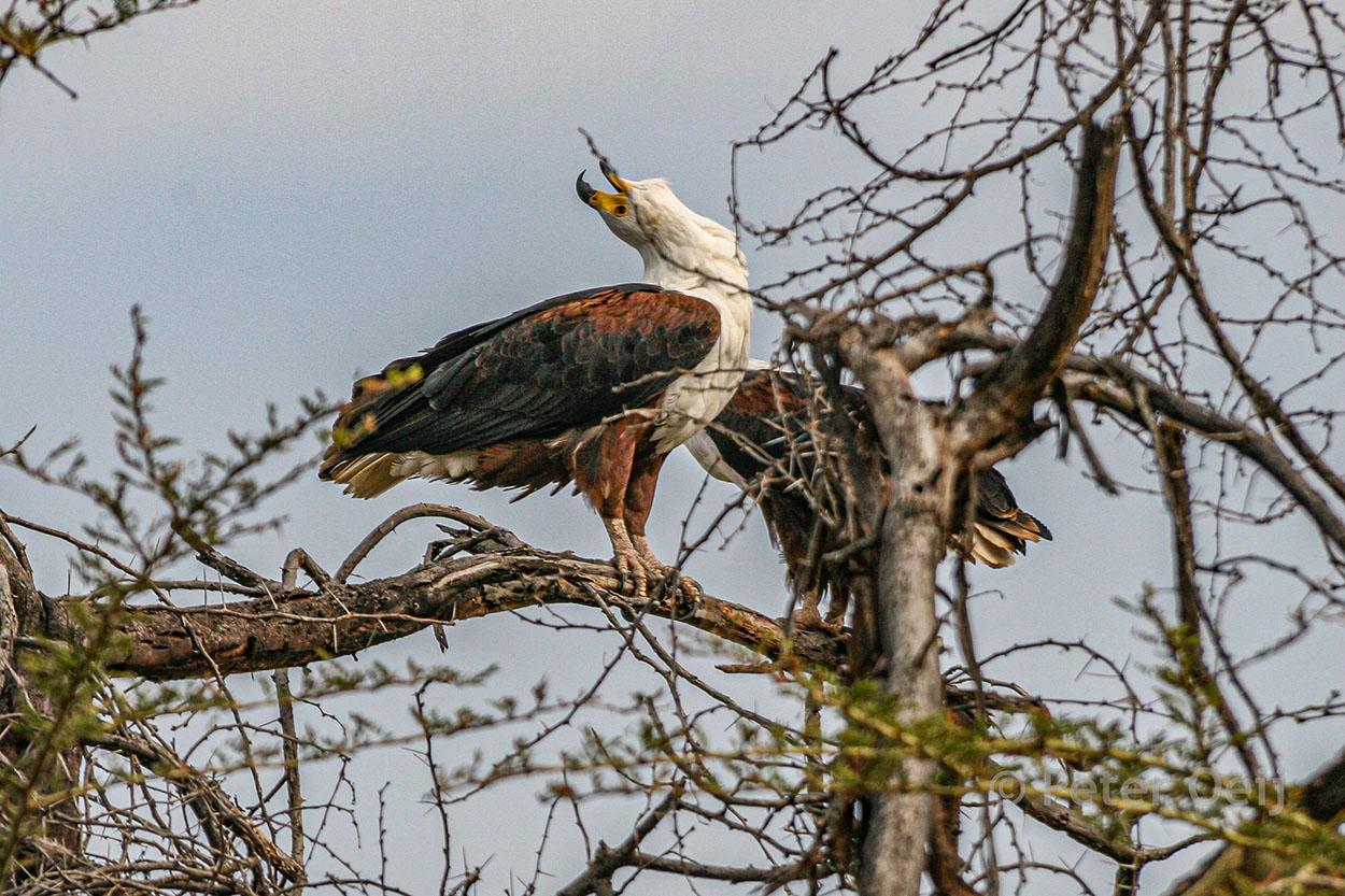 tanzania 2012_eagle