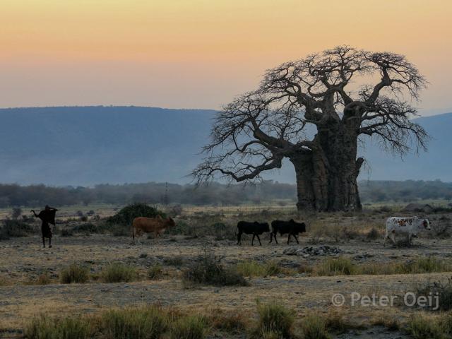 tanzania 2012_baobab