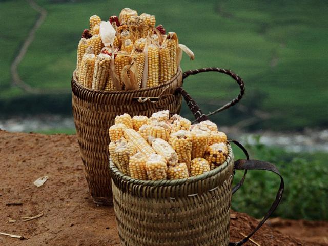 vietnam 1998_bask with corn
